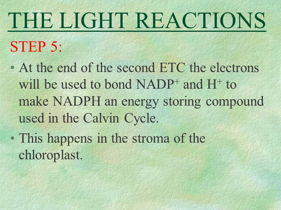 THE LIGHT REACTIONS STEP 5: