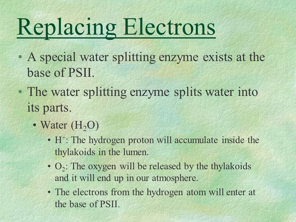 Replacing Electrons A special water splitting enzyme exists at the base of PSII. The water splitting enzyme splits water into its parts.