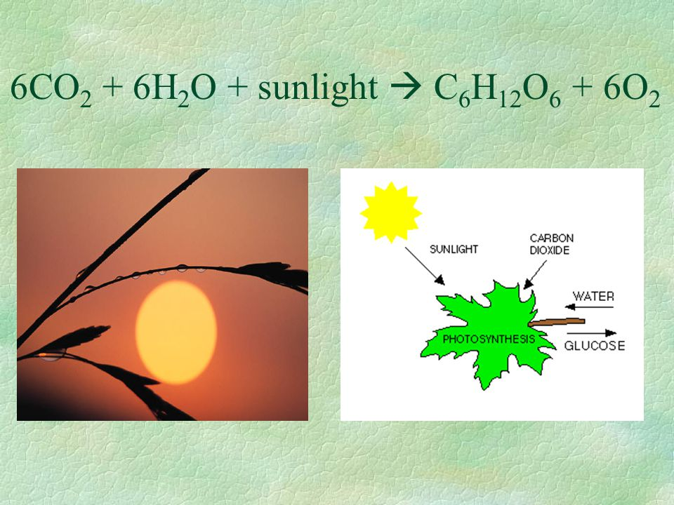 6CO2 + 6H2O + sunlight  C6H12O6 + 6O2