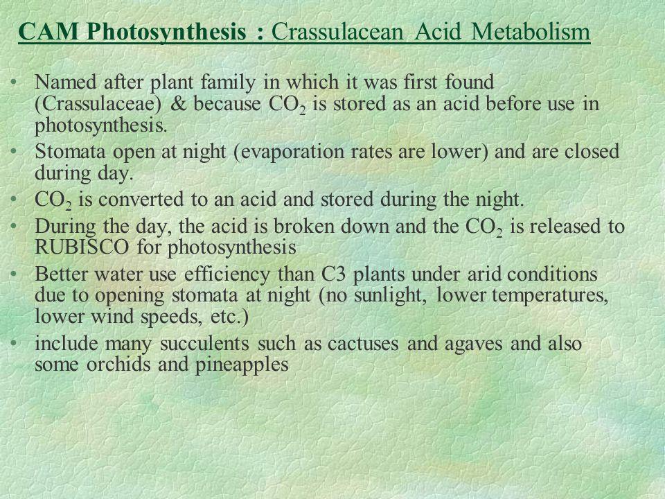 CAM Photosynthesis : Crassulacean Acid Metabolism