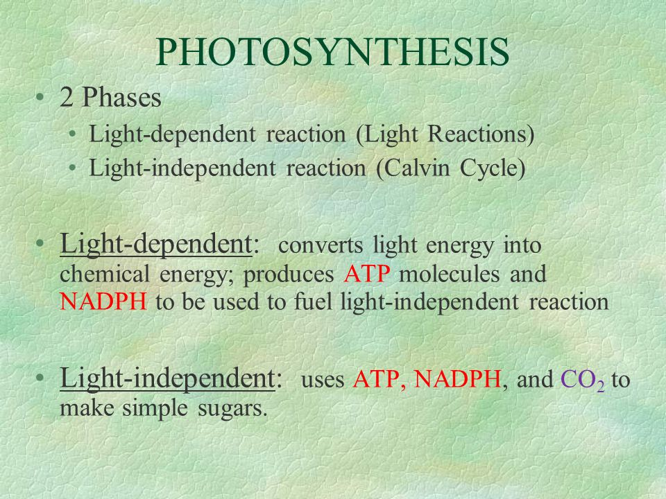 PHOTOSYNTHESIS 2 Phases