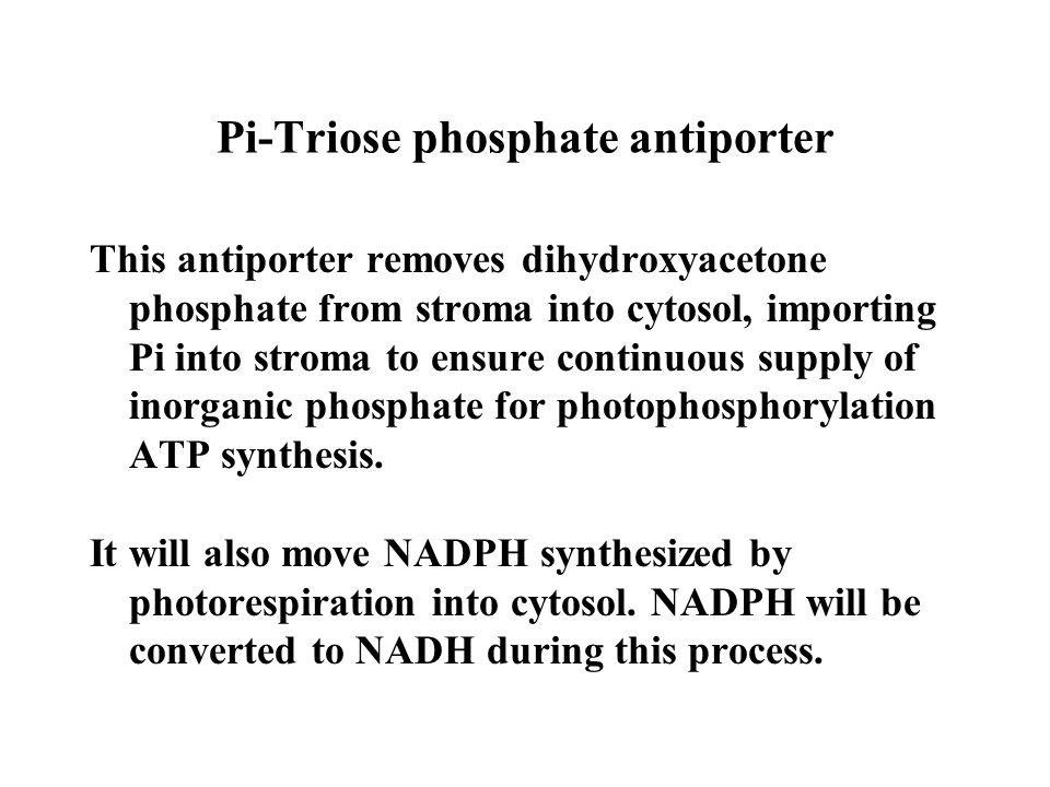 Pi-Triose phosphate antiporter