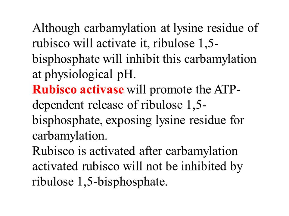 Although carbamylation at lysine residue of rubisco will activate it, ribulose 1,5-bisphosphate will inhibit this carbamylation at physiological pH.