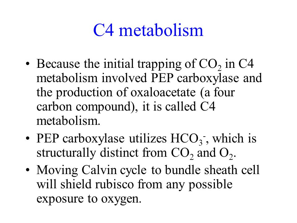 C4 metabolism