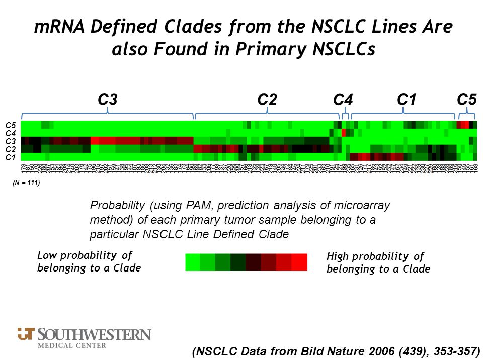 mRNA Defined Clades from the NSCLC Lines Are also Found in Primary NSCLCs