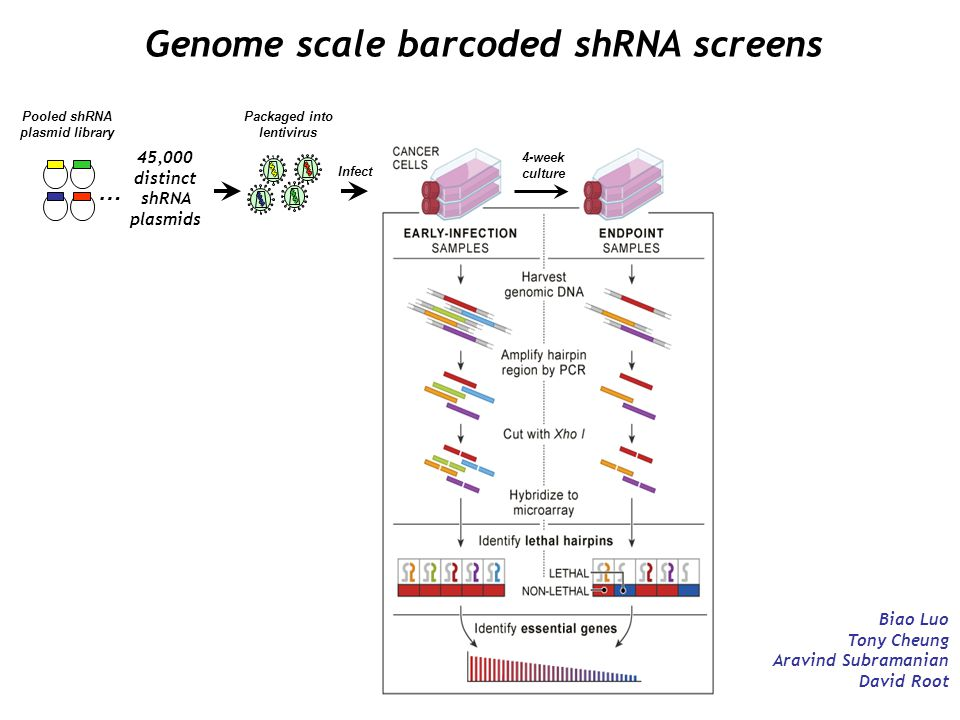 Genome scale barcoded shRNA screens