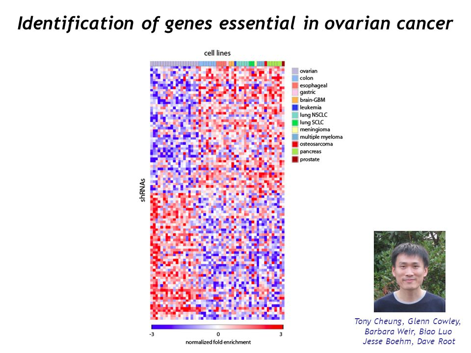 Identification of genes essential in ovarian cancer
