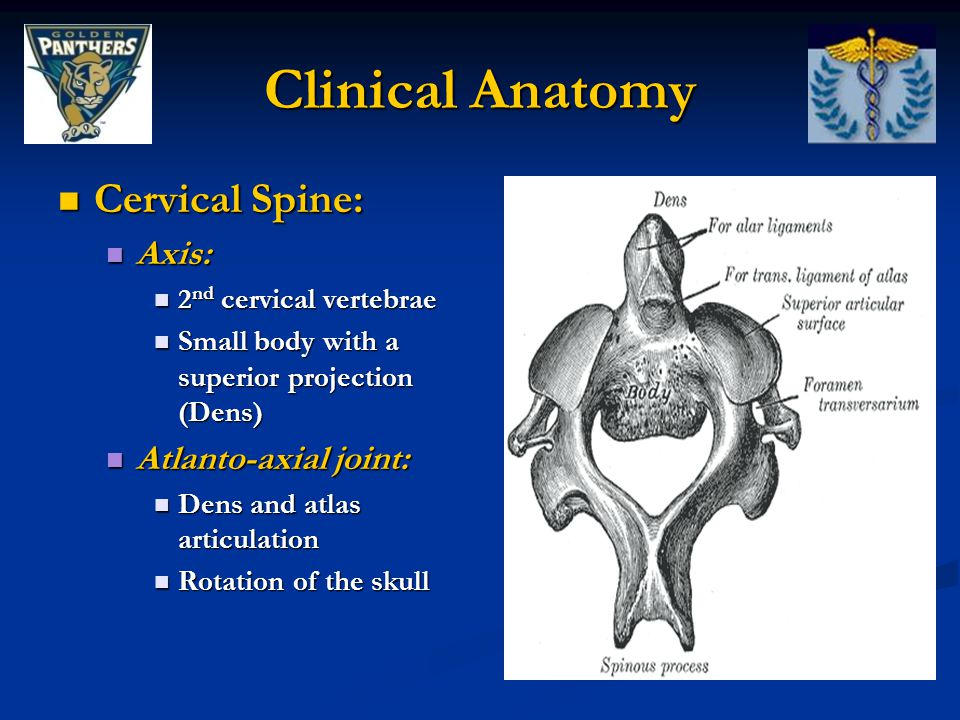Clinical Anatomy Cervical Spine: Axis: Atlanto-axial joint: