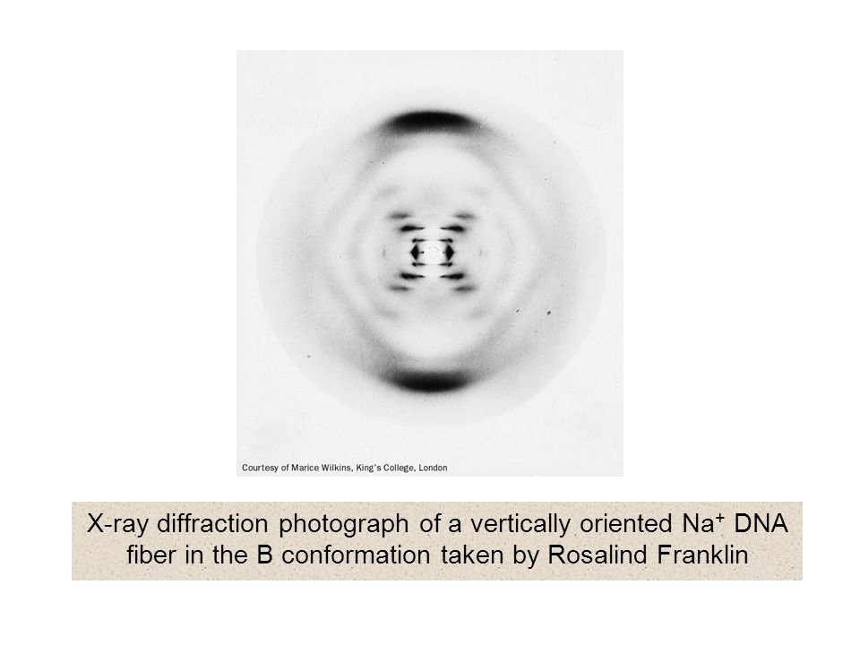 X-ray diffraction photograph of a vertically oriented Na+ DNA fiber in the B conformation taken by Rosalind Franklin