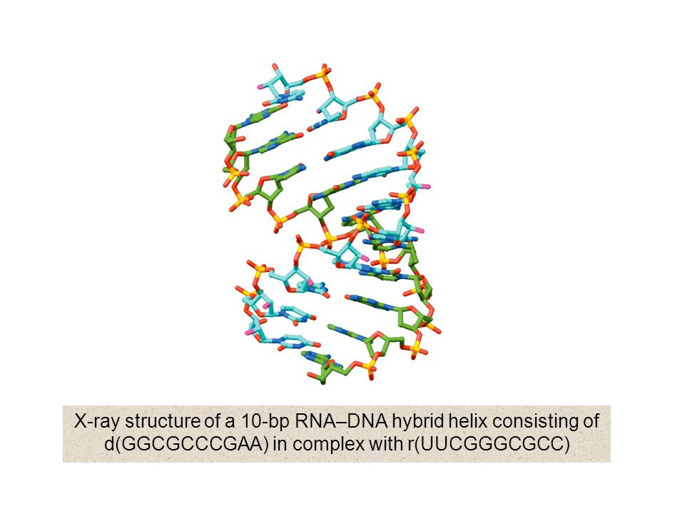 X-ray structure of a 10-bp RNA–DNA hybrid helix consisting of d(GGCGCCCGAA) in complex with r(UUCGGGCGCC)
