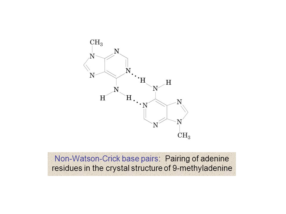 Non-Watson-Crick base pairs: Pairing of adenine residues in the crystal structure of 9-methyladenine
