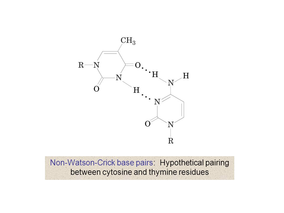 Non-Watson-Crick base pairs: Hypothetical pairing between cytosine and thymine residues