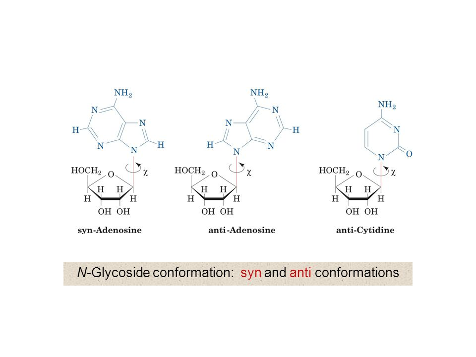 N-Glycoside conformation: syn and anti conformations