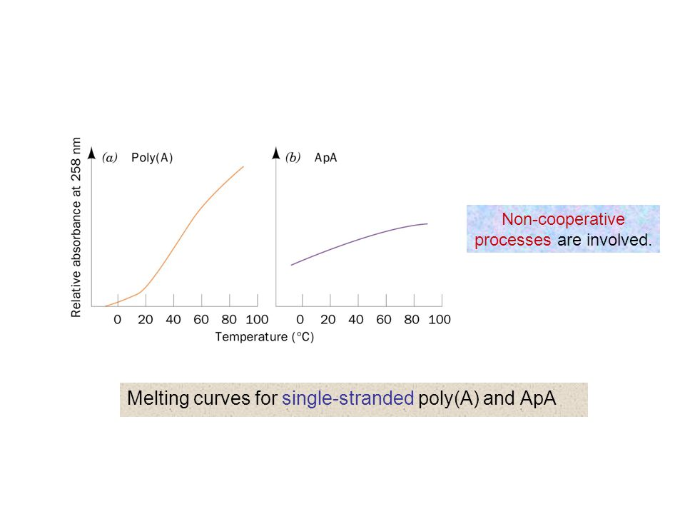 Melting curves for single-stranded poly(A) and ApA
