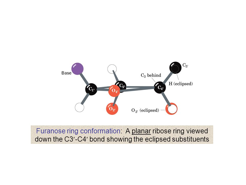 Furanose ring conformation: A planar ribose ring viewed down the C3-C4 bond showing the eclipsed substituents