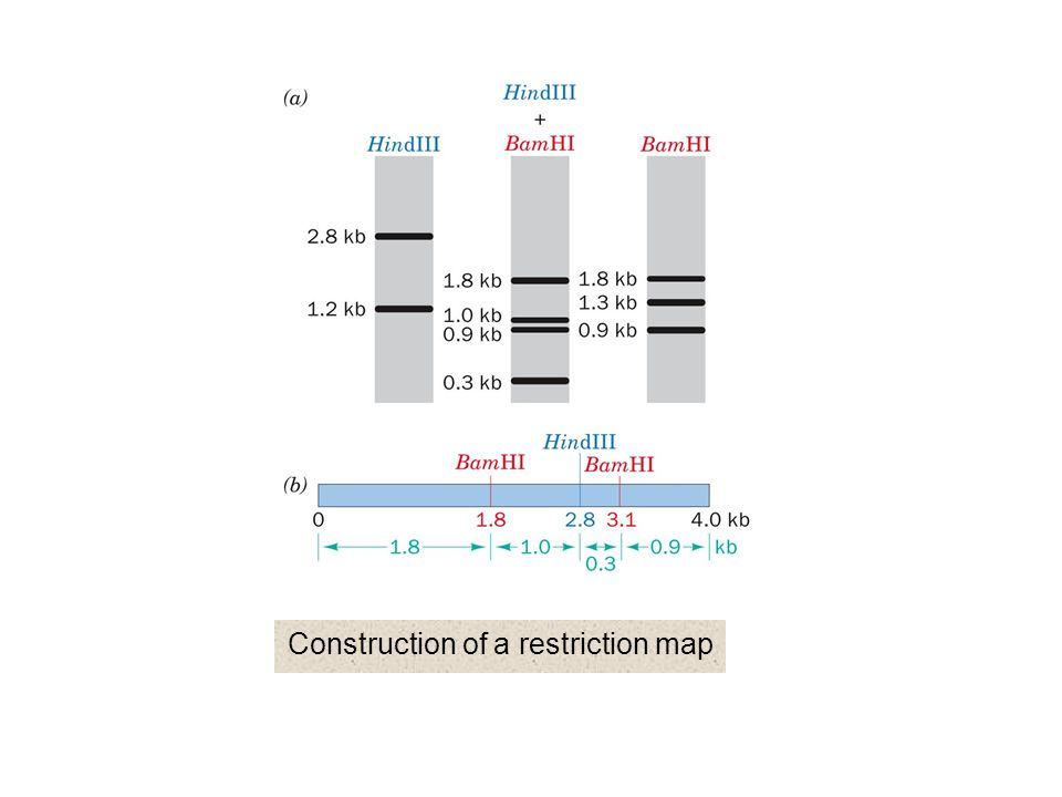 Construction of a restriction map