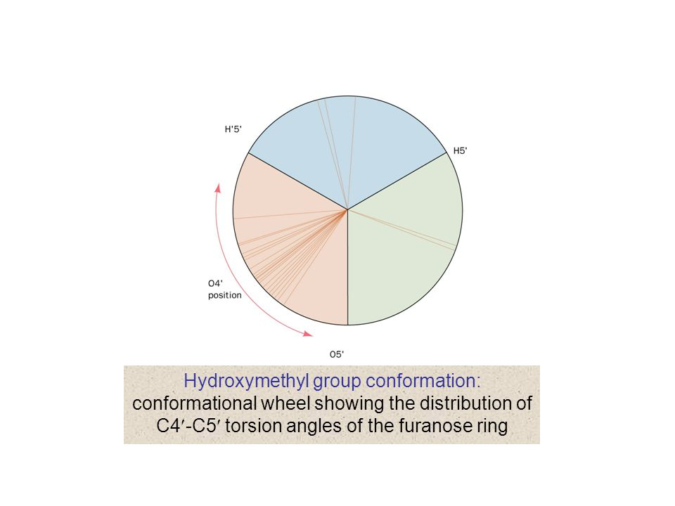 Hydroxymethyl group conformation: conformational wheel showing the distribution of C4-C5 torsion angles of the furanose ring