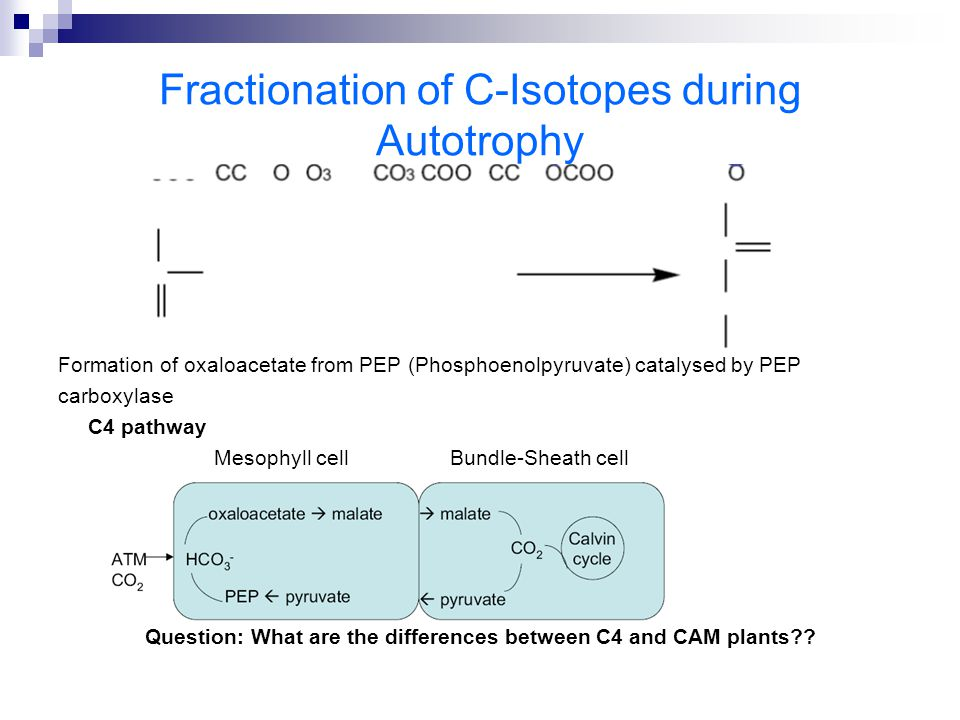 Fractionation of C-Isotopes during Autotrophy