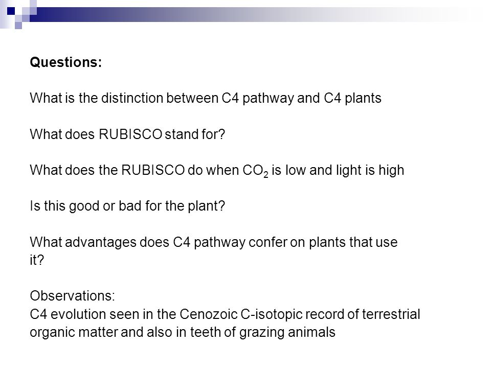 Questions: What is the distinction between C4 pathway and C4 plants. What does RUBISCO stand for