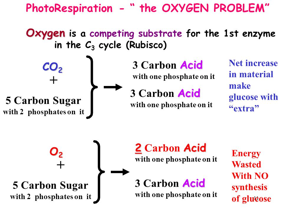 + + PhotoRespiration - the OXYGEN PROBLEM