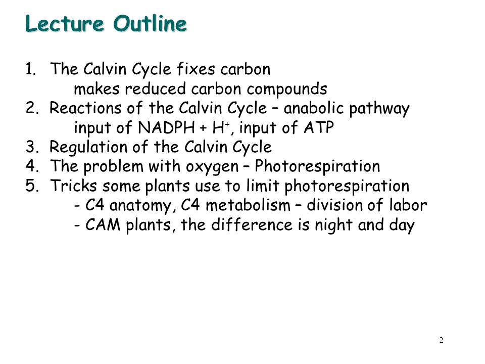 Lecture Outline The Calvin Cycle fixes carbon