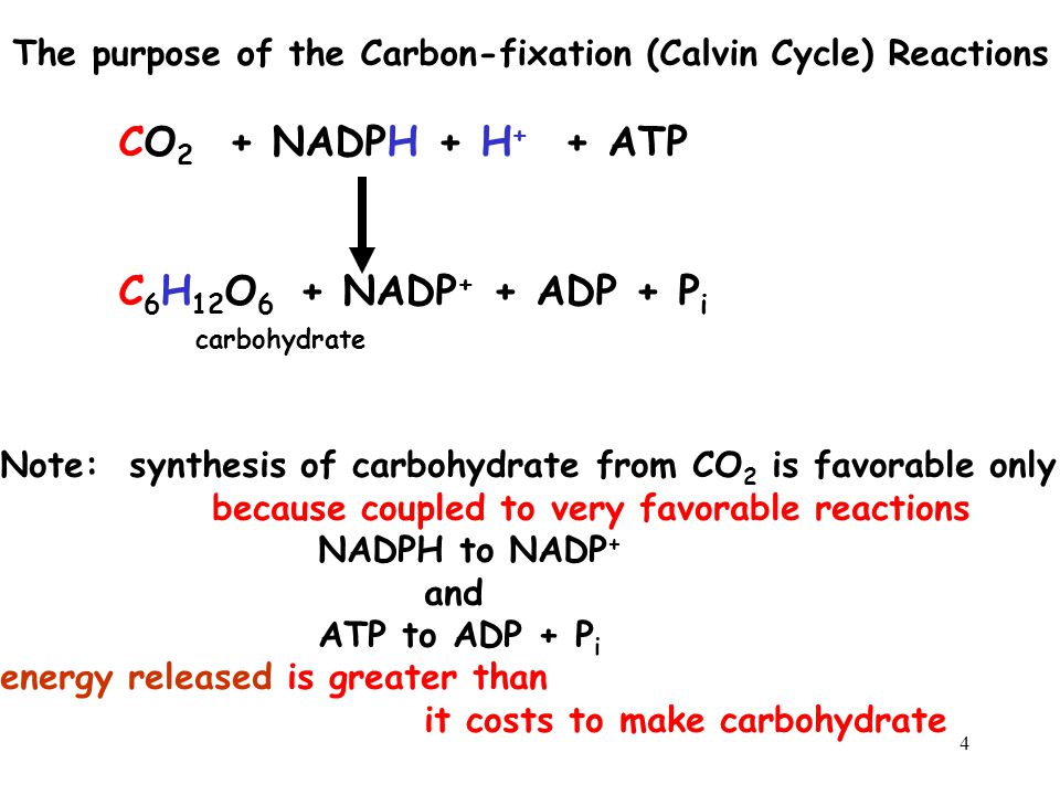 The purpose of the Carbon-fixation (Calvin Cycle) Reactions