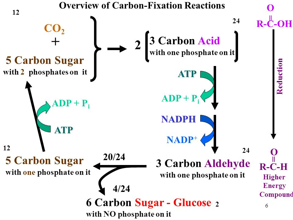 + 2 CO2 3 Carbon Acid 5 Carbon Sugar 5 Carbon Sugar 3 Carbon Aldehyde