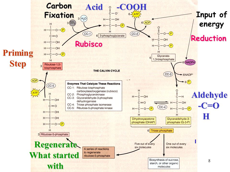 Acid -COOH Priming Step Regenerate What started with