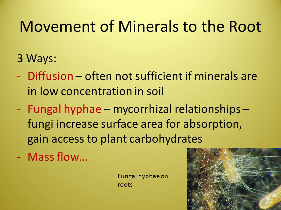 Movement of Minerals to the Root