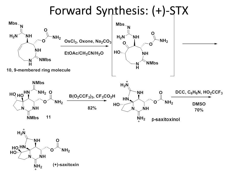 Forward Synthesis: (+)-STX
