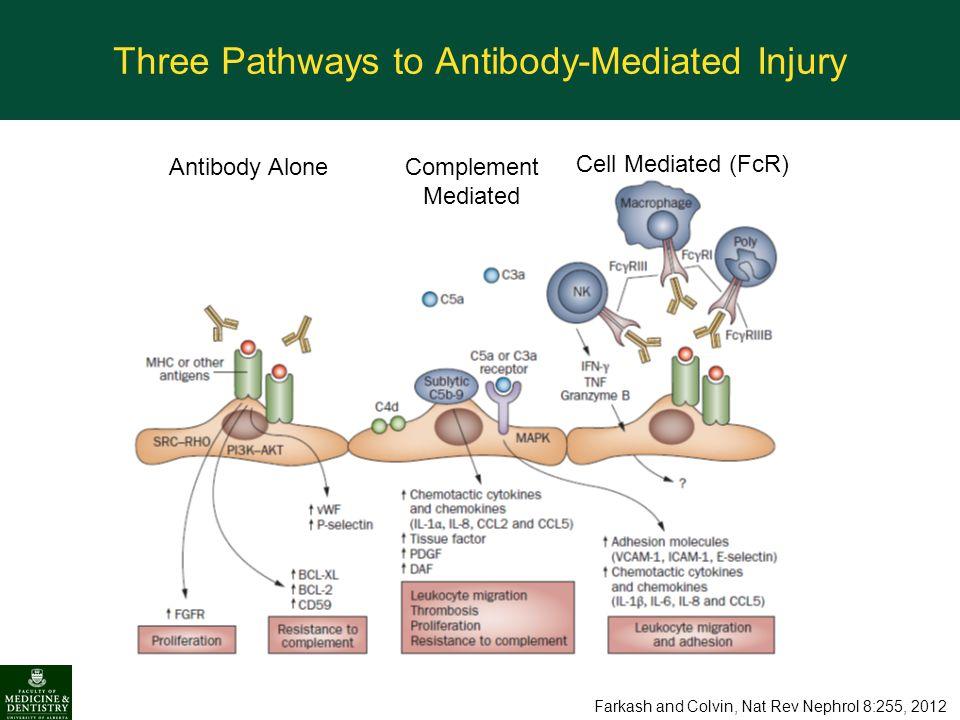Three Pathways to Antibody-Mediated Injury
