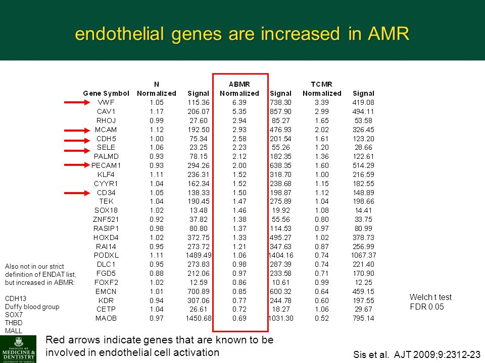 endothelial genes are increased in AMR