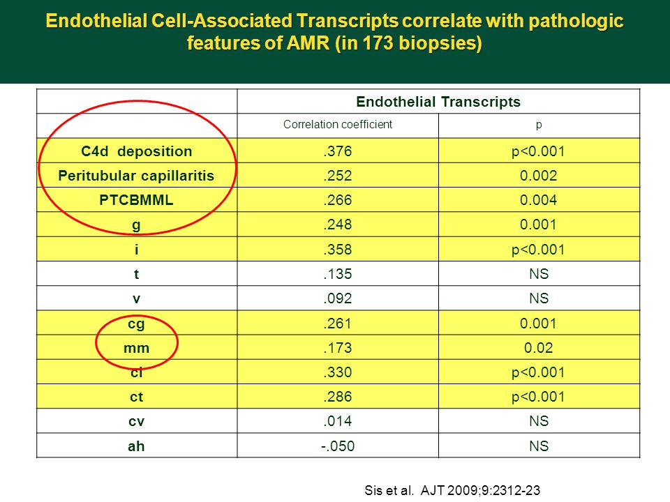 Endothelial Transcripts Peritubular capillaritis