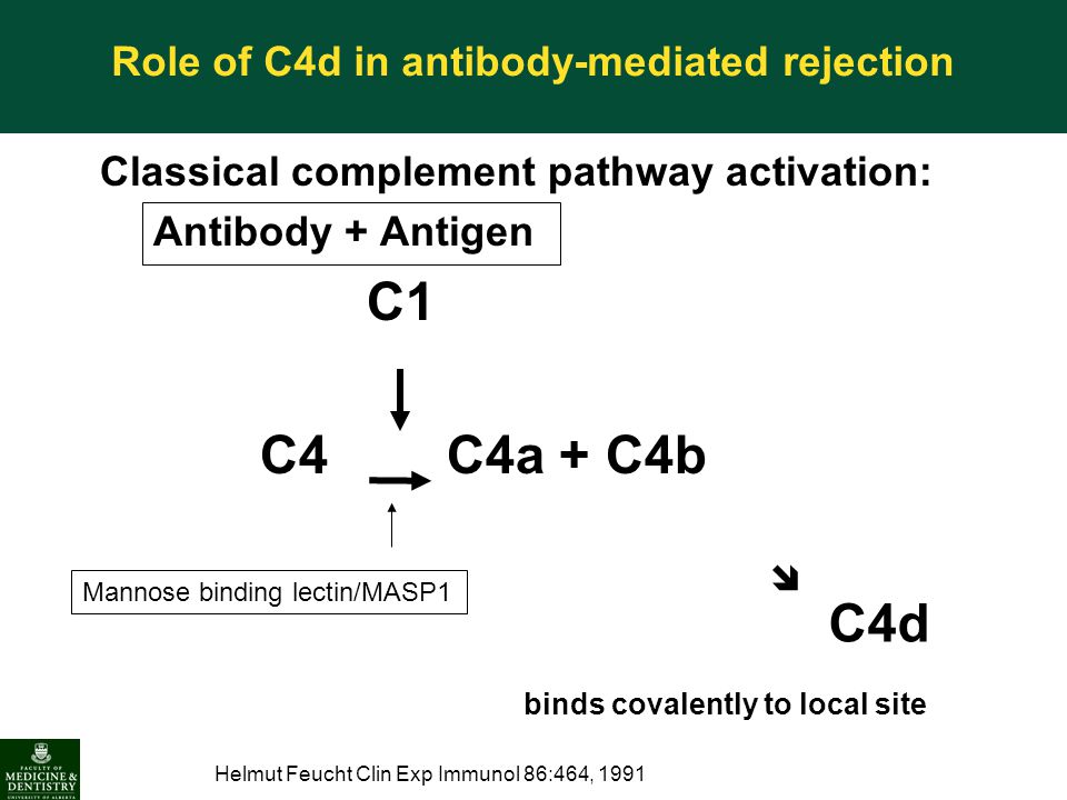 Role of C4d in antibody-mediated rejection