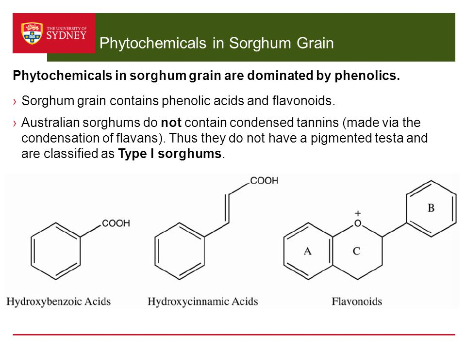 Phytochemicals in Sorghum Grain