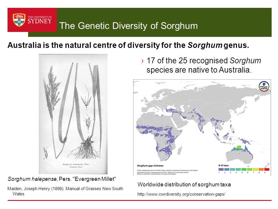 The Genetic Diversity of Sorghum