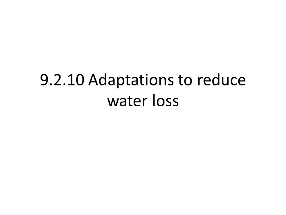 9.2.10 Adaptations to reduce water loss