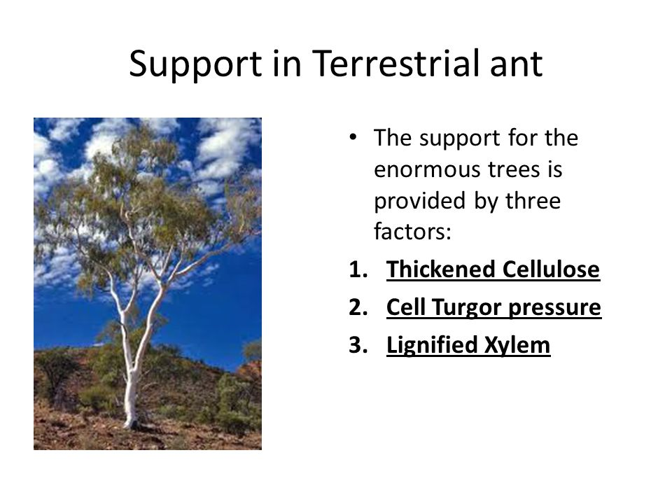 Support in Terrestrial ant