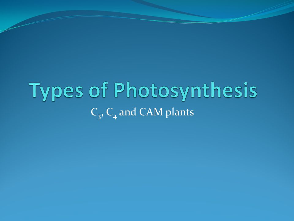 two tpes of photosythesis Cam plants, examples and plant families cam plants are those which photosynthesize through crassulacean acid metabolism or cam photosynthesis types of.