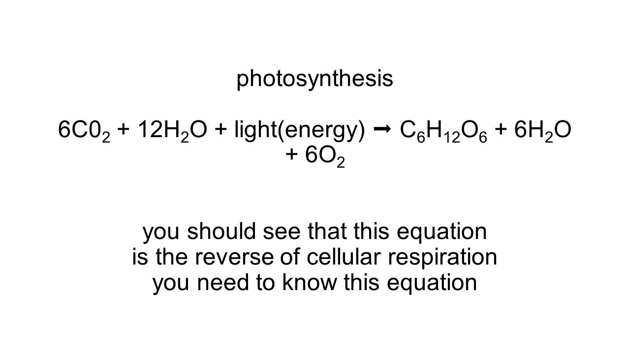 photosynthesis 6C02 + 12H2O + light(energy)  C6H12O6 + 6H2O + 6O2 you should see that this equation is the reverse of cellular respiration you need to know this equation
