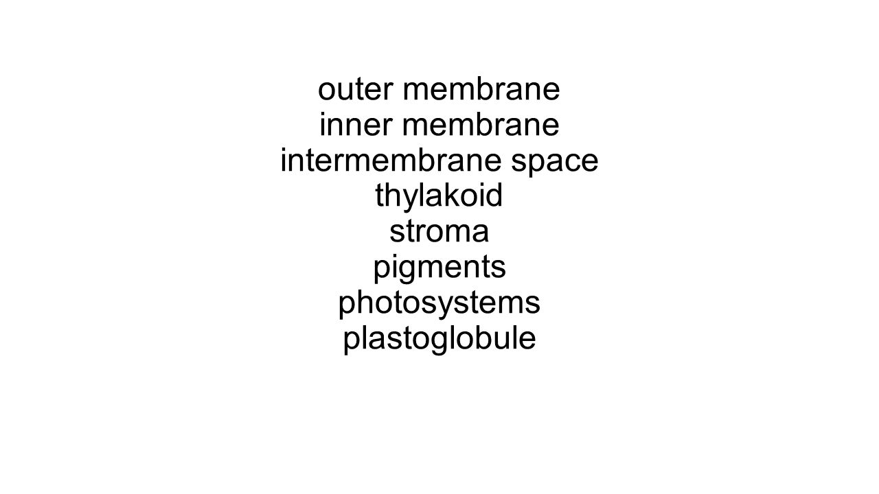 outer membrane inner membrane intermembrane space thylakoid stroma pigments photosystems plastoglobule