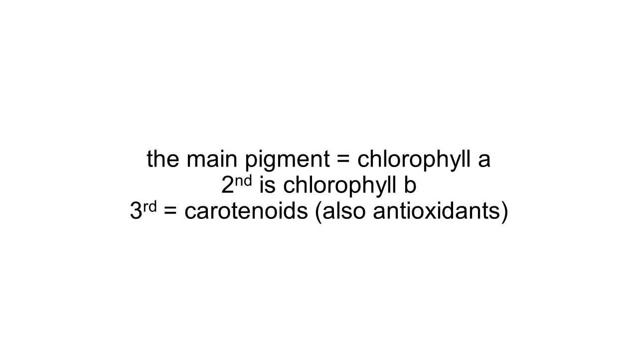 the main pigment = chlorophyll a 2nd is chlorophyll b 3rd = carotenoids (also antioxidants)