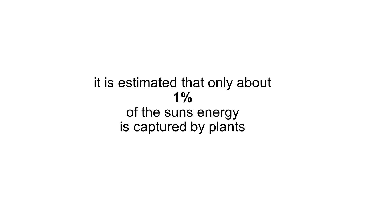 it is estimated that only about 1% of the suns energy is captured by plants