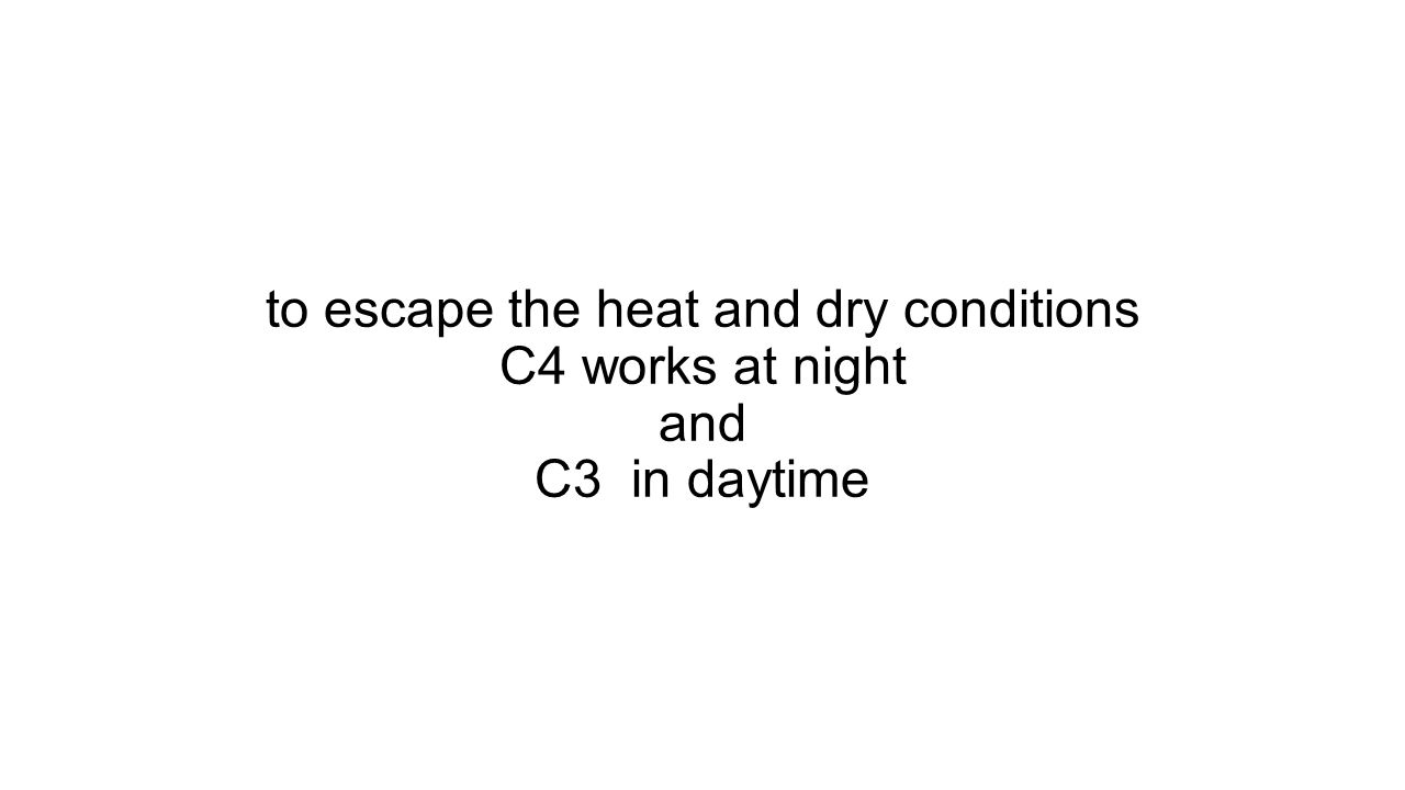 to escape the heat and dry conditions C4 works at night and C3 in daytime