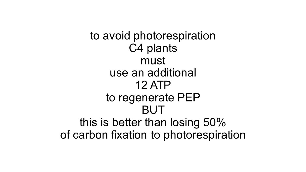 to avoid photorespiration C4 plants must use an additional 12 ATP to regenerate PEP BUT this is better than losing 50% of carbon fixation to photorespiration