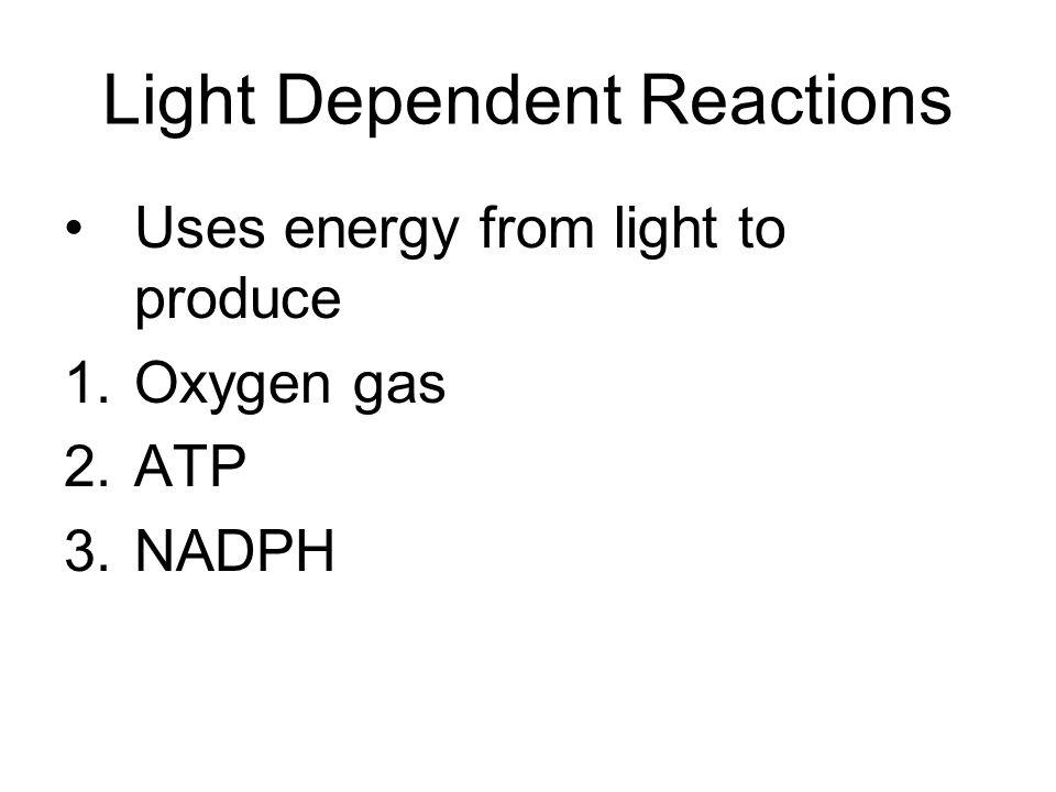 Light Dependent Reactions
