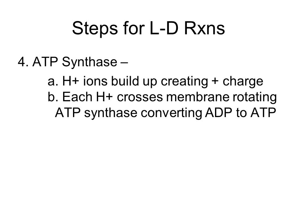 Steps for L-D Rxns 4. ATP Synthase – a. H+ ions build up creating + charge b.