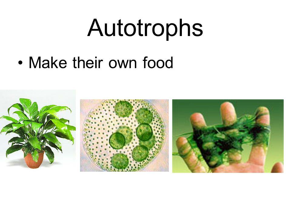 Autotrophs Make their own food