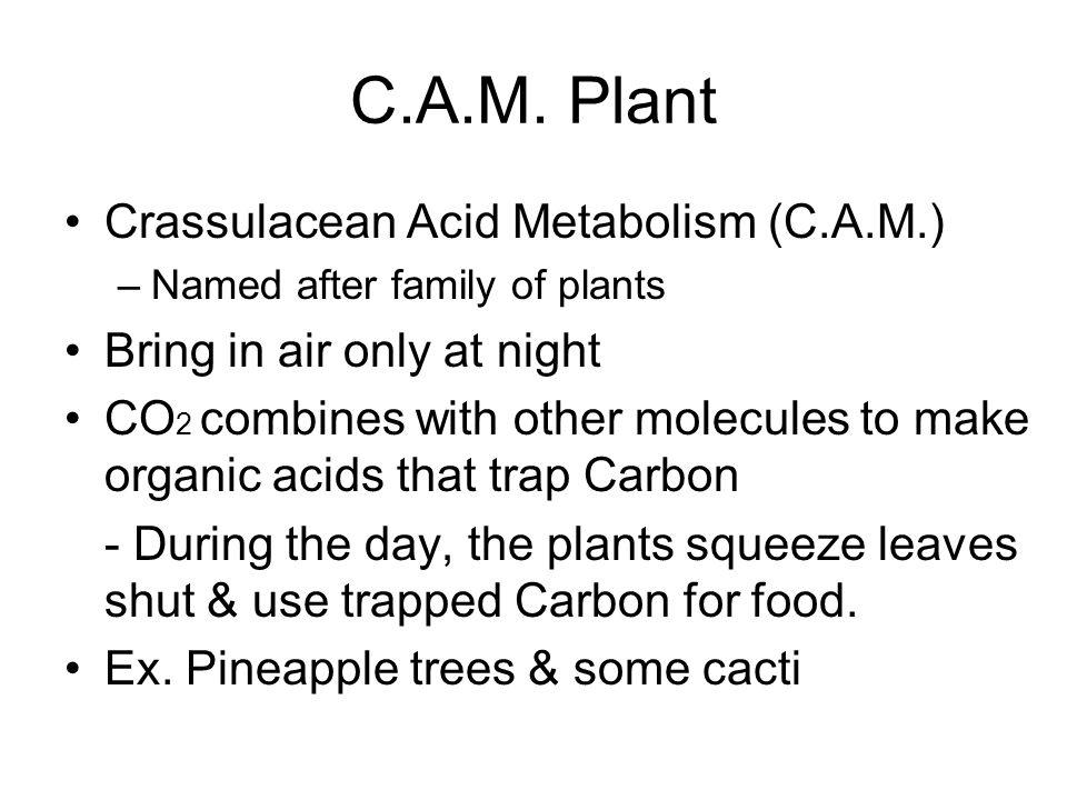 C.A.M. Plant Crassulacean Acid Metabolism (C.A.M.)