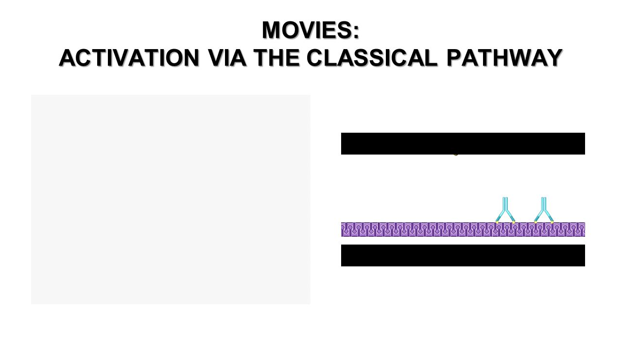 MOVIES: ACTIVATION VIA THE CLASSICAL PATHWAY